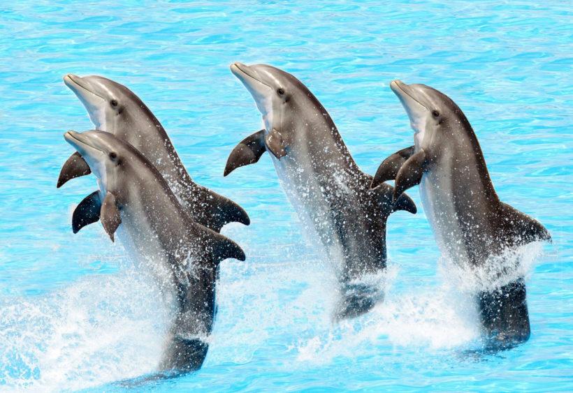 Delfinárium – ZOO Norimberk